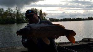 Common Carp — Loic VANDERGHOOTE