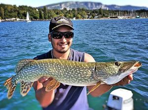 Northern Pike — Hicham Jost
