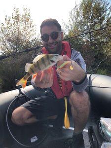 European Perch — Yohan Fishing