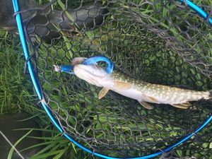 Northern Pike — Valentin LEVITRE