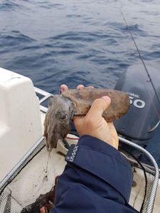 Common Cuttlefish — Sebastien Fisher
