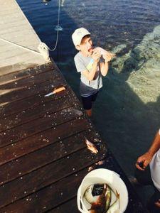 Common Pandora — Côme rockfishing