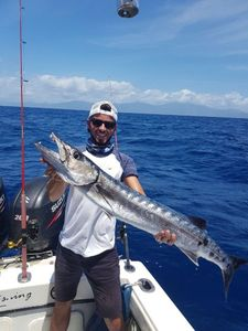 Great Barracuda — Mathieu Dauchez