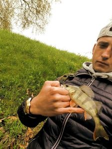 European Perch — Julien  Lesueur