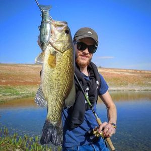 Largemouth Bass — Alexis Braynas
