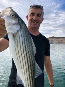 Striped Bass (Landlocked) — Jean Marie Lacombe