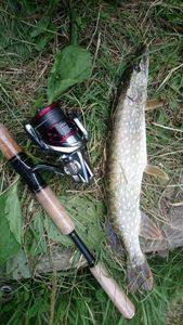 Northern Pike — Steve Mury