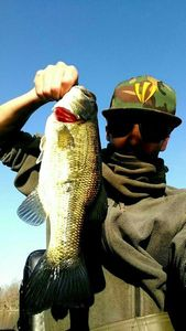 Largemouth Bass — Valentin Fourmaut