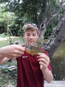 Green Sunfish — Abel Duges