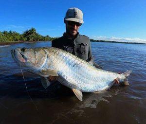 Tarpon — Guillaume Martinez moniteur guide de pêche