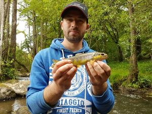 Brown Trout — Kevin Tostivint