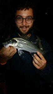 European Bass — Mattia Azzollino