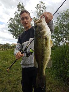 Largemouth Bass — Marco Sardo Cardalano