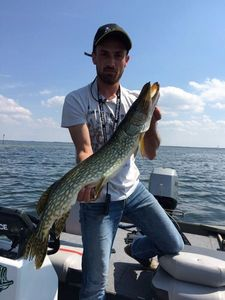 Northern Pike — Florian Malapeyre