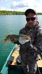 Northern Pike — Carna Brothers Fish ( Anthony )