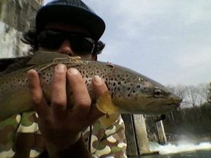 Common Trout — Guillaume Lacouture
