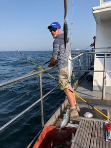 Atlantic Horse Mackerel — Loic Capelle