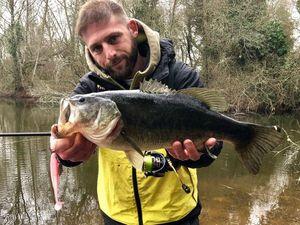 Largemouth Bass — Adrien Rigau