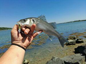 European Bass — Rémi Vanassche