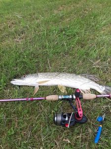 Northern Pike — Pascal Bruneau