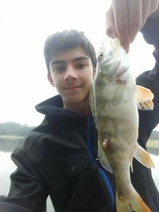 European Perch — Thomass Fishing