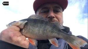 European Perch — Mathuston Family Fishing