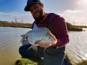 Common Bream — Adrien Sardin