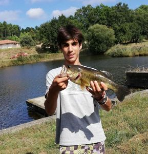 Largemouth Bass — Corto Oliva