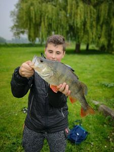 European Perch — Romain Francisco