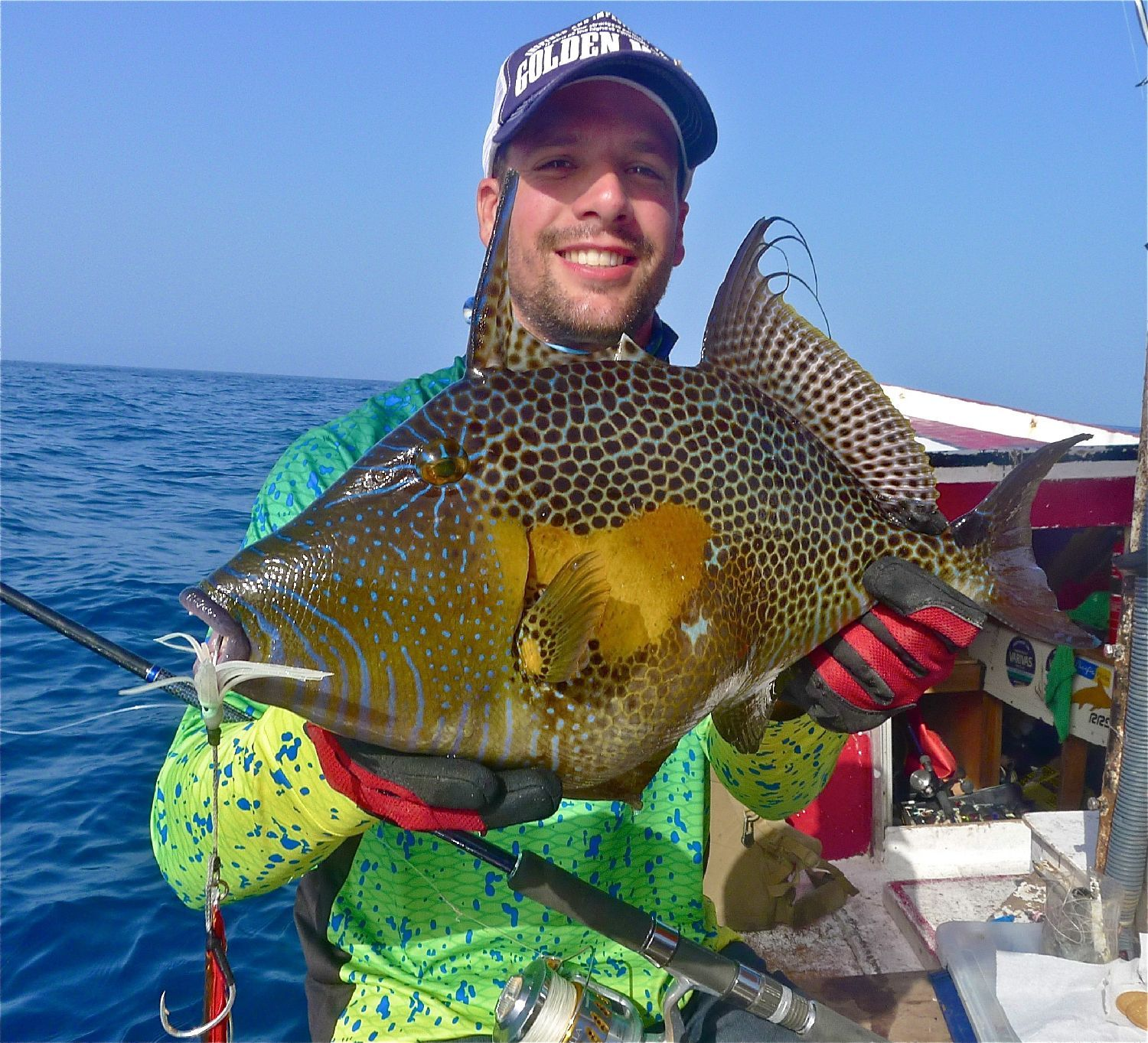 Spotted Triggerfish