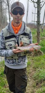 Brown Trout — Leo Rouvroy