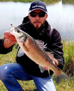 European Bass — Myk Fishingddict