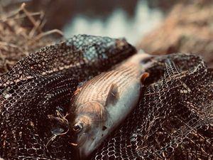 Grayling — Zygimantas Pacevicius