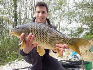 Common Carp — Xavier TERCIER