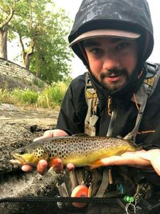 Brown Trout — Anselme  Boissonnet