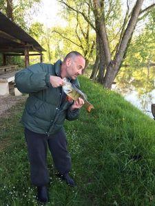 European Perch — Steph Allain