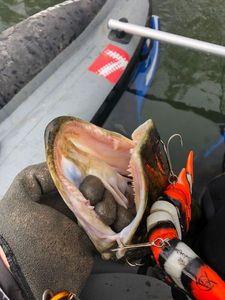 Northern Pike — Ir We Fish Pike Addict