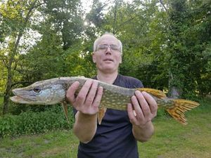 Northern Pike — Philippe Boucher