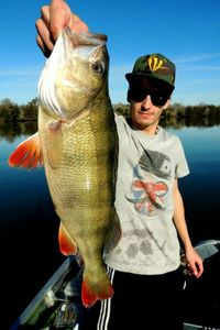 European Perch — Valentin Fourmaut