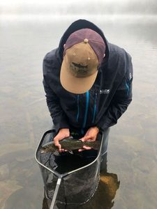 Brook Trout — Lucas Chamayou