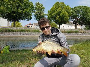 Common Carp — Jonathan Lamy-Chappuis