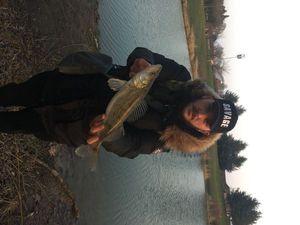 Zander — Flox Fishing