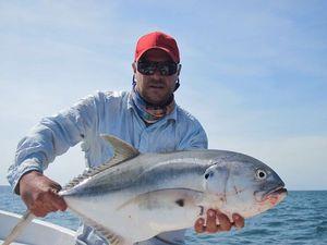 Carangue du Pacifique — Chris Panama