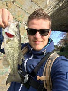 Largemouth Bass — Axel Rauch