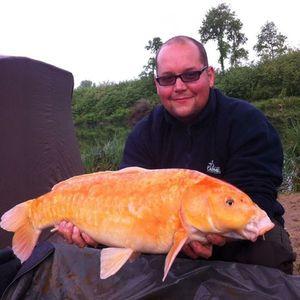 Koï Fish — Tony Beaudoin