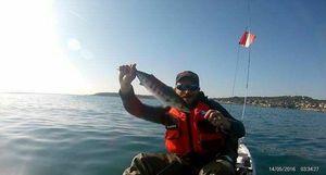 Skipjack Tuna — Nissa Djé