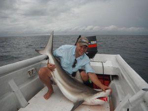 Requin Pointes Noires — Chris Panama