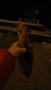 European Squid — Dav Leg