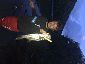 Snook (Brochet de Mer) — Simon Collet