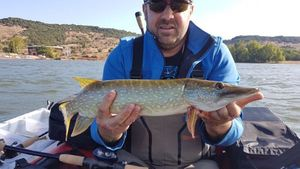 Northern Pike — Guillaume GuiGui